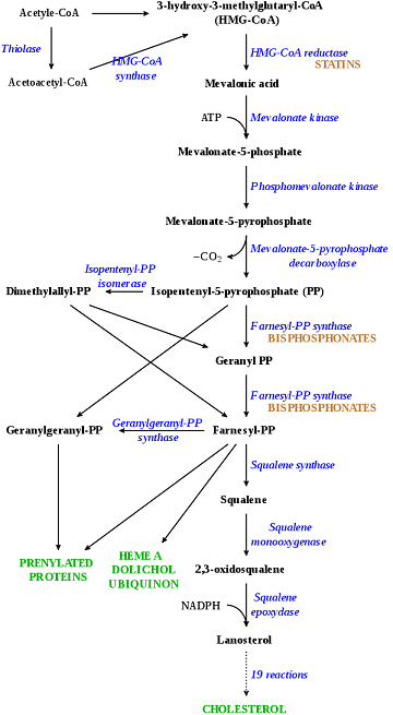 Image Credit: https://en.wikipedia.org/wiki/File:HMG-CoA_reductase_pathway.svg