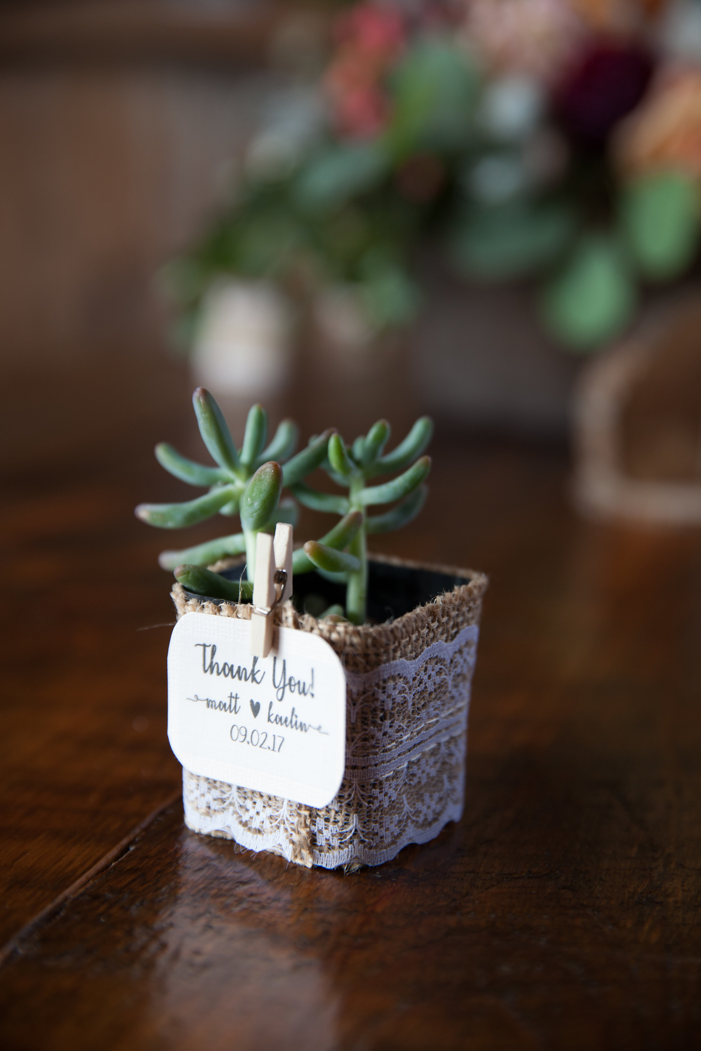 Succulent Favors - Pearl Weddings and Events
