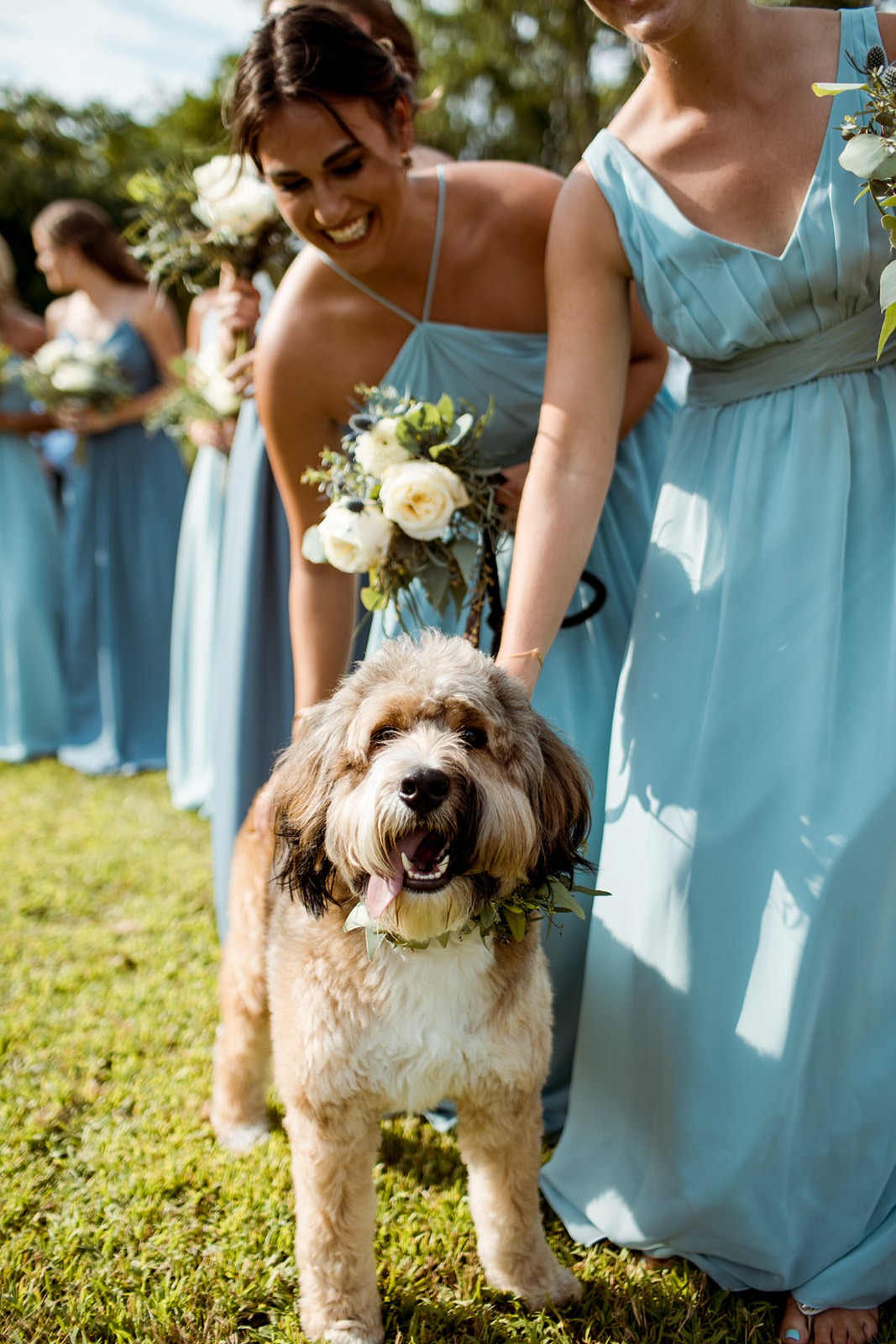 Dog at the wedding ceremony! - Pearl Weddings & Events