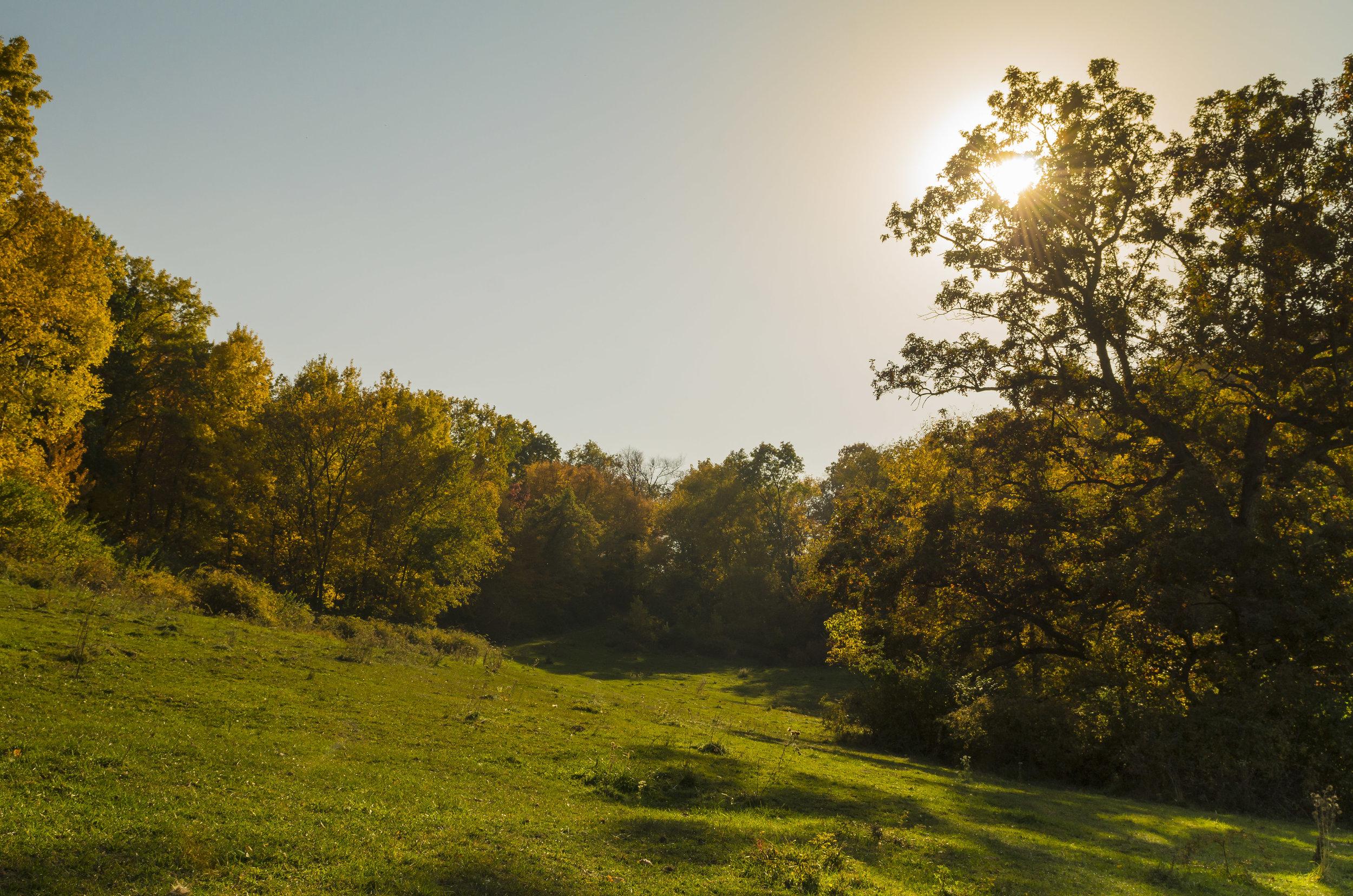Strauss Farm for Behance-2.jpg