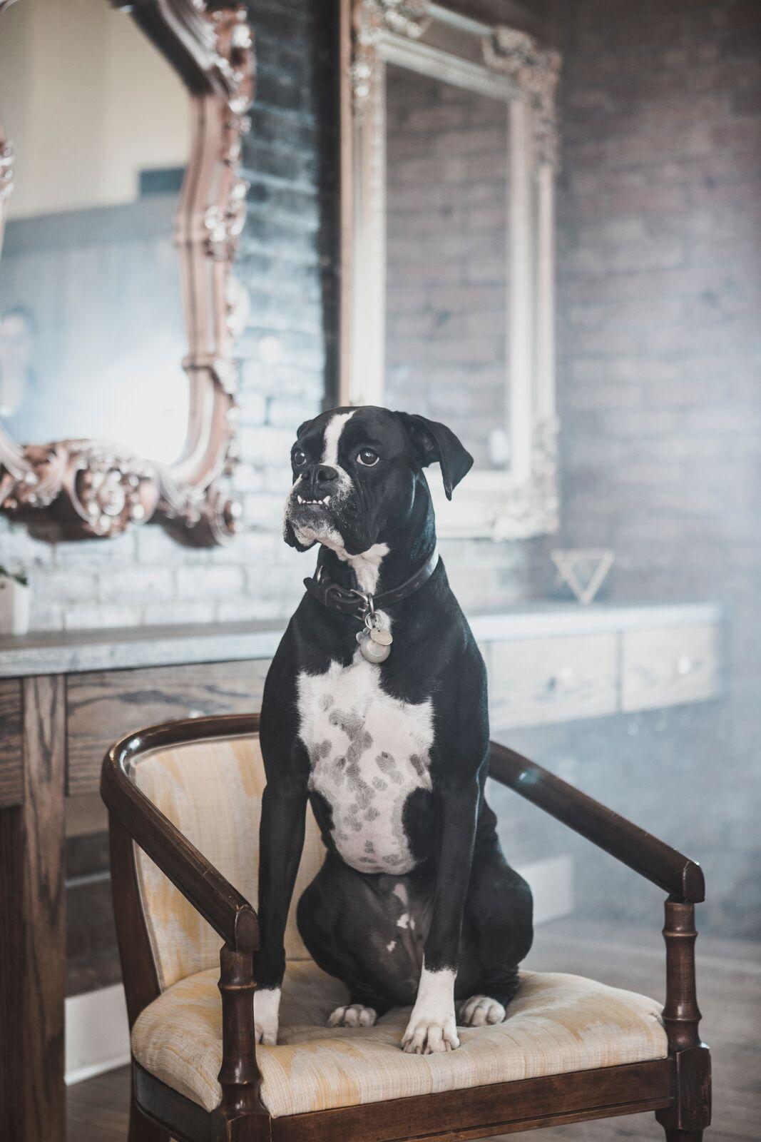 Franny - Shop Dog