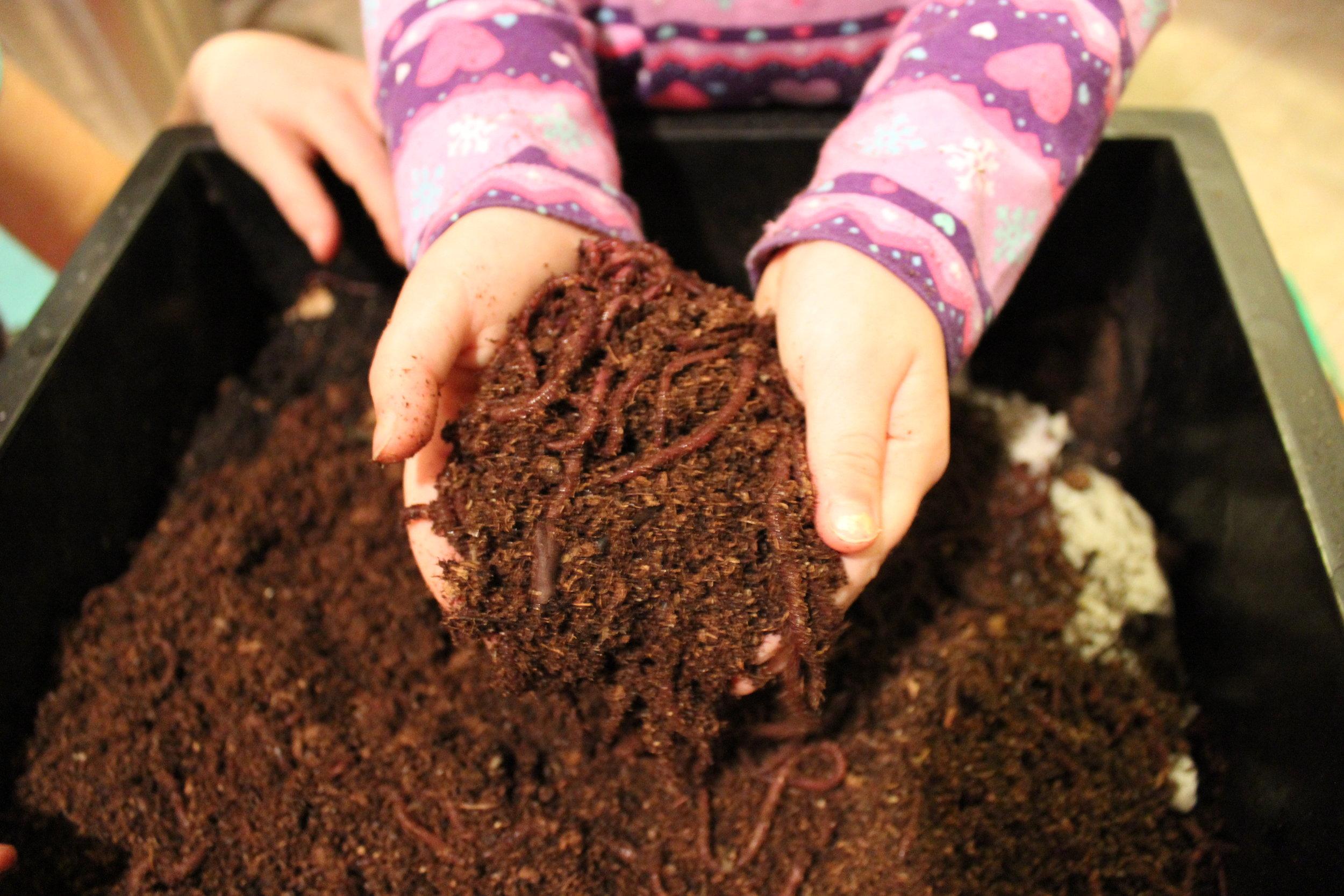 Vermicomposting (the indoor worm composting bin)