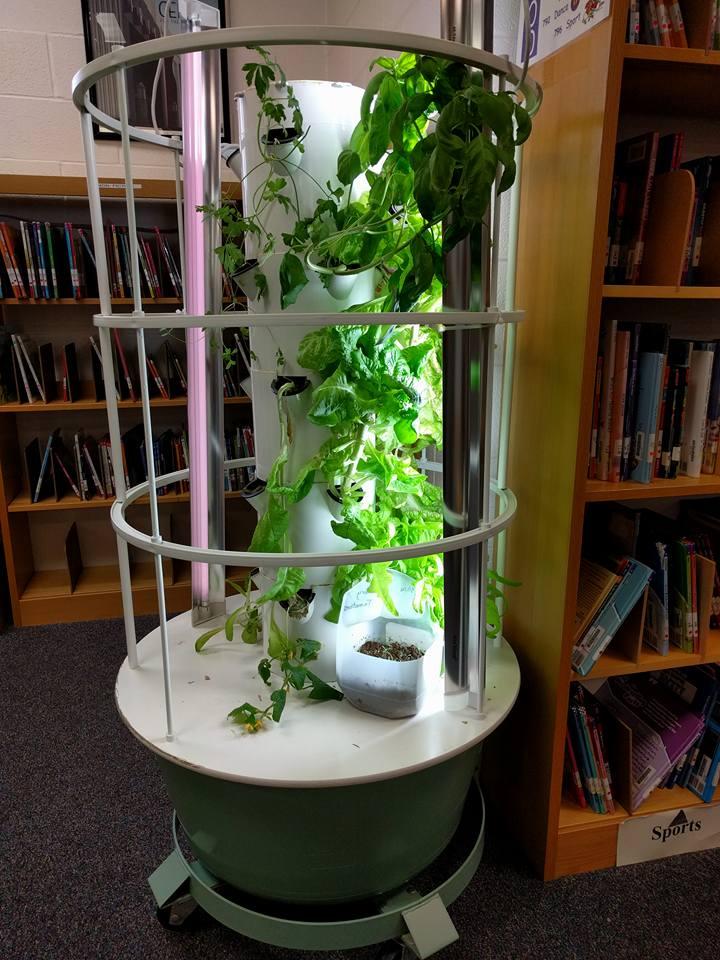 Urban Farming with Hydroponics