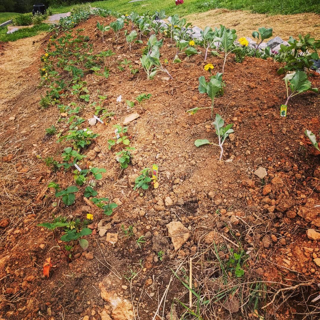 Hugelkultur mound