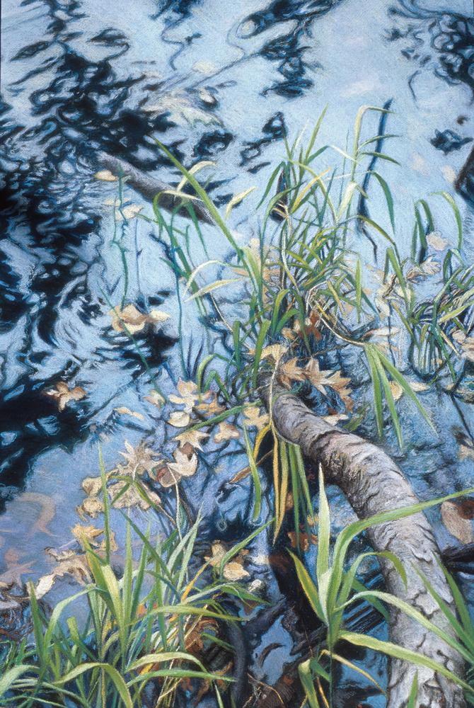 fallen river birch