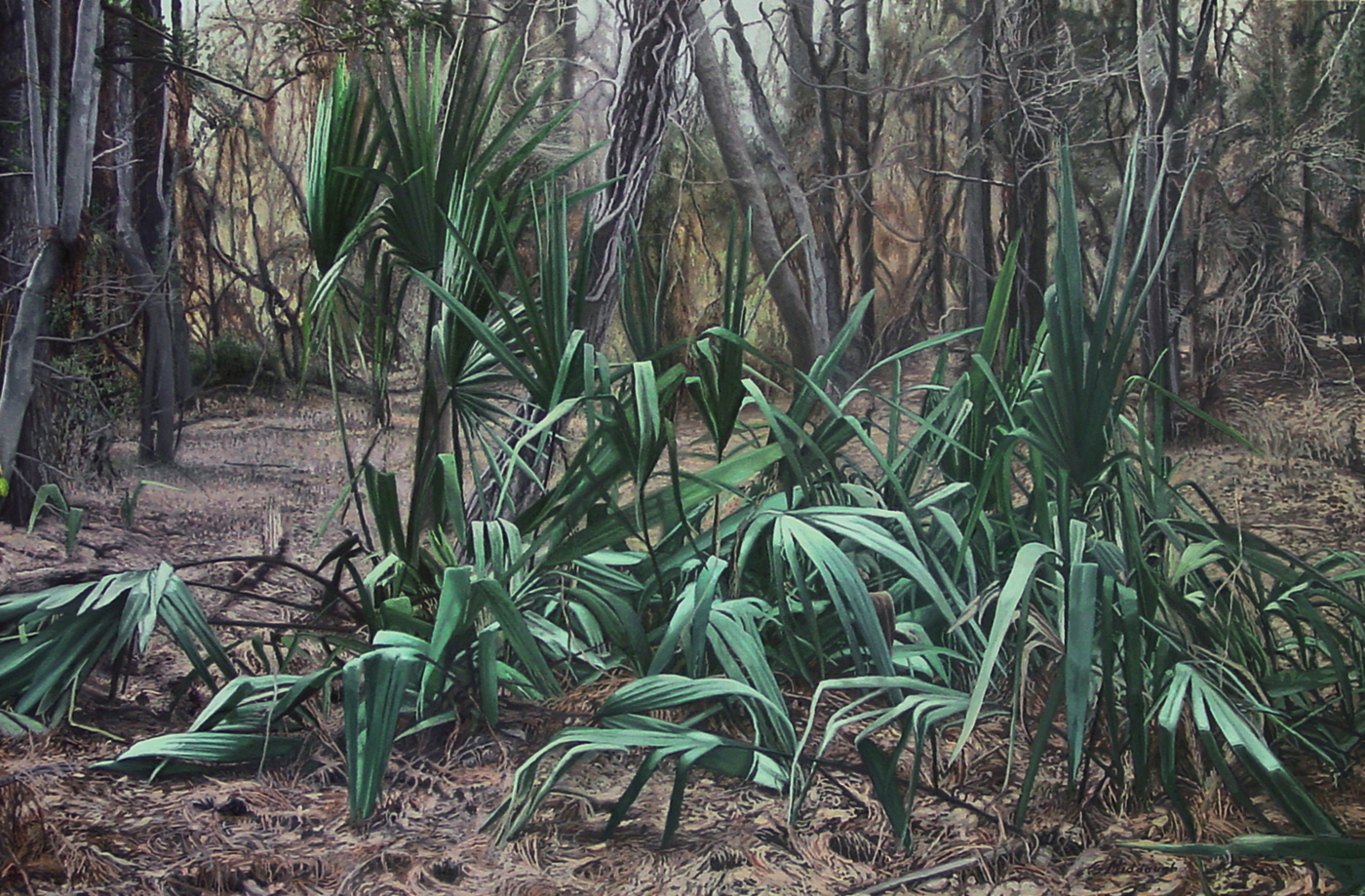 a gathering of palmettos