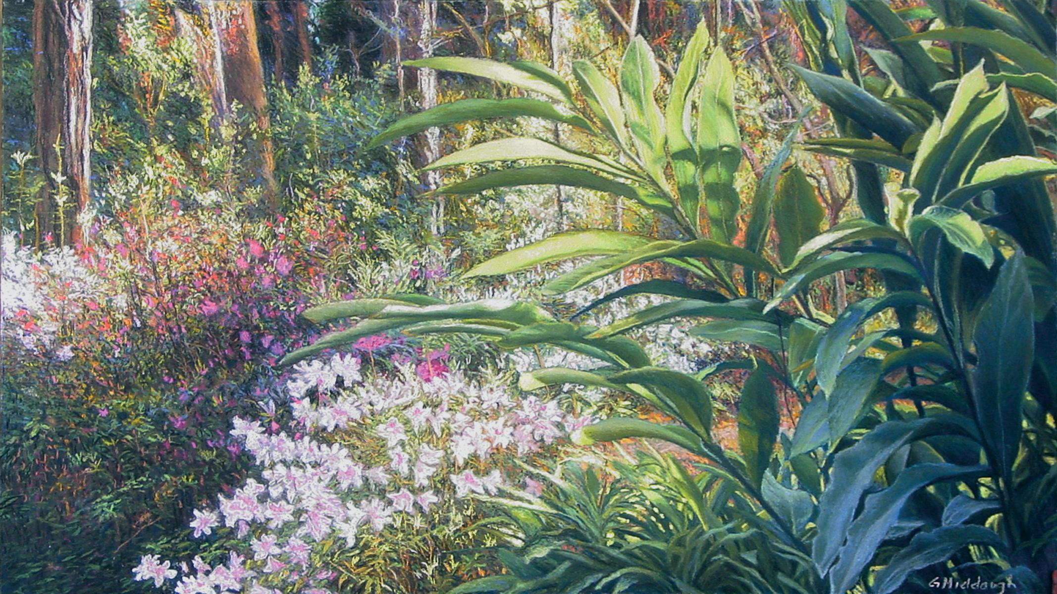 azaleas at the arboretum