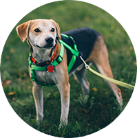 dog and leash in grass circle crppped.png