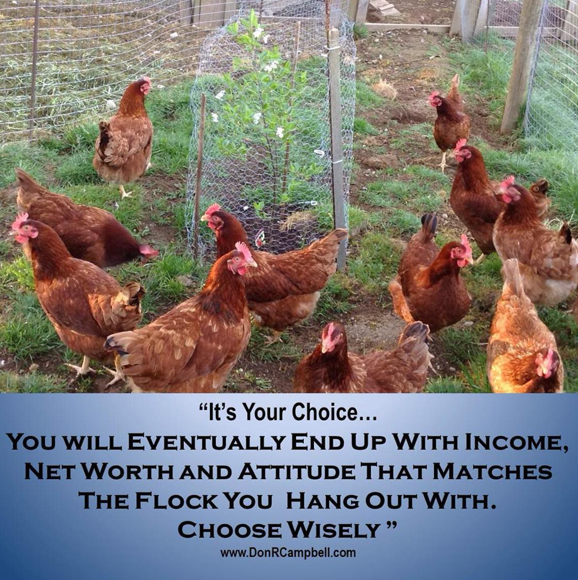 chicken-wisdom.png