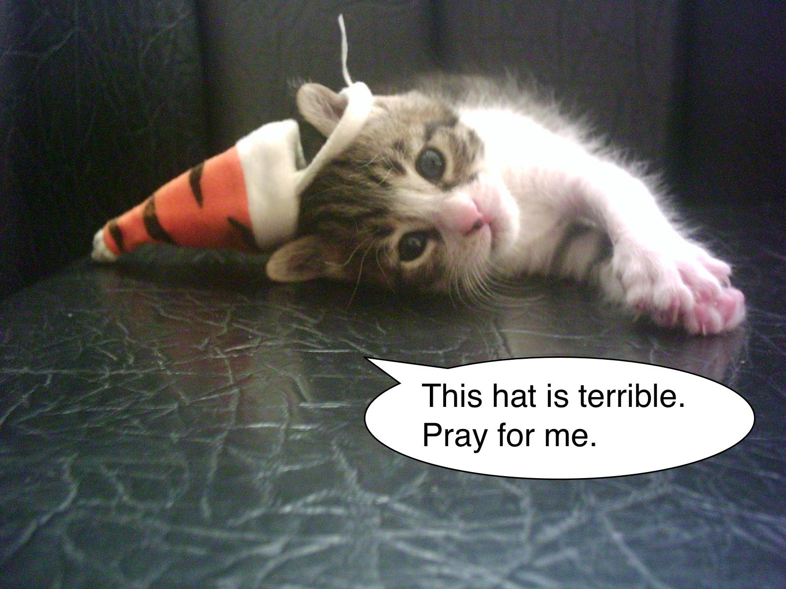cat_prayer.jpg