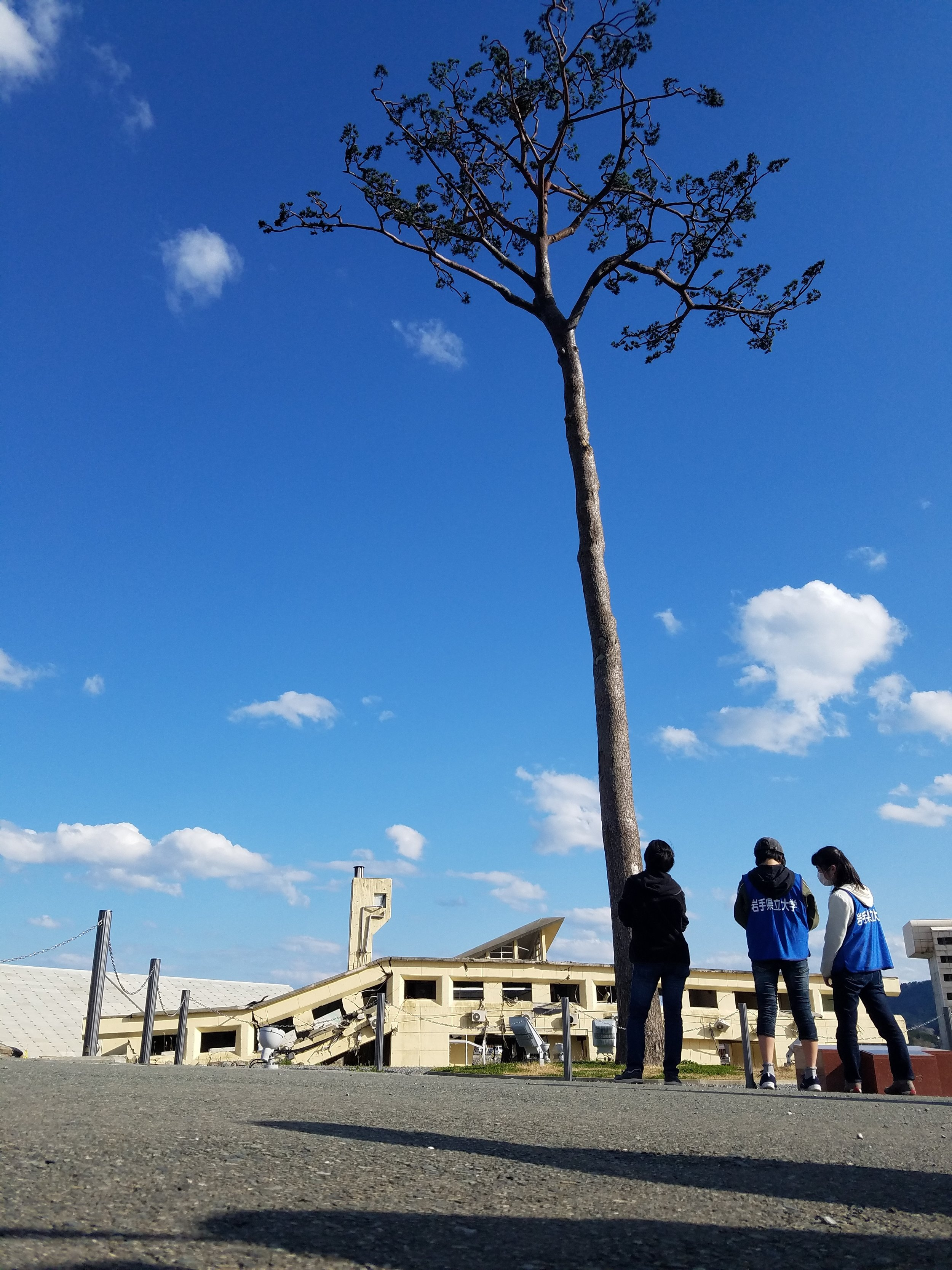 """The """"Miracle Pine""""was the only tree of 70,000 to withstand the Tohoku tsunami, now stands as a symbol of hope for all of Japan as the country rebuilds itself."""