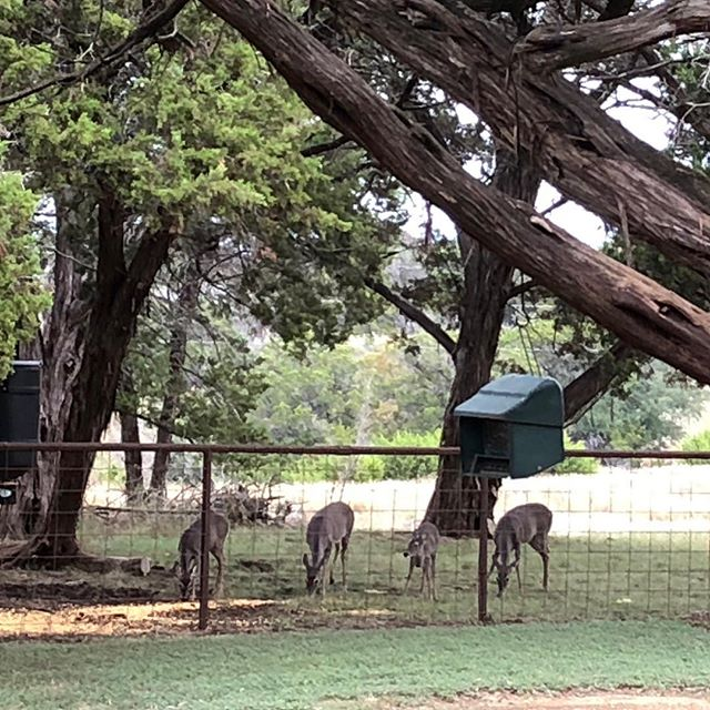 We love feeding the deer 🦌 so our guests can enjoy them. This was taken by one of our guest from the cabin!  Thank you @angbrownboerne