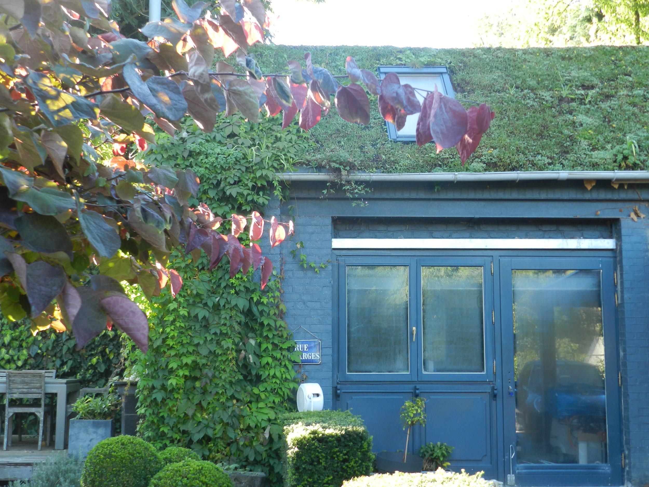 vgtex - toiture verte inclinée