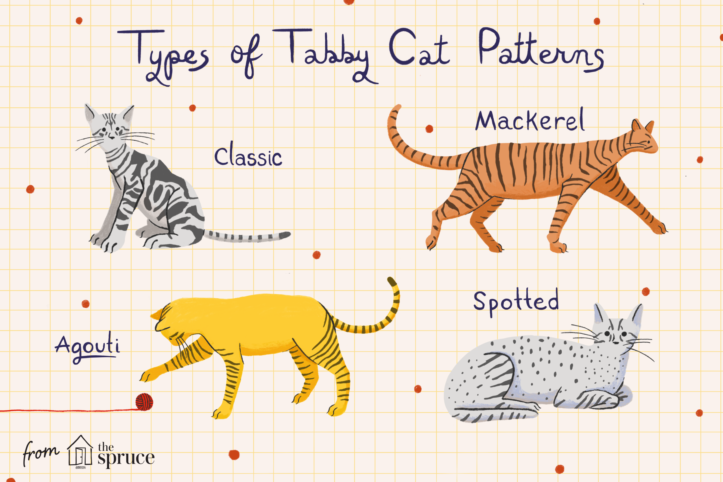 all-about-tabby-cats-552489_V2.png