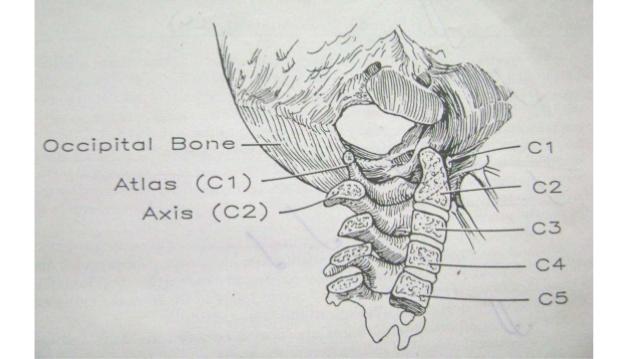 craniovertebral-junction-anomalies-3-638.jpg