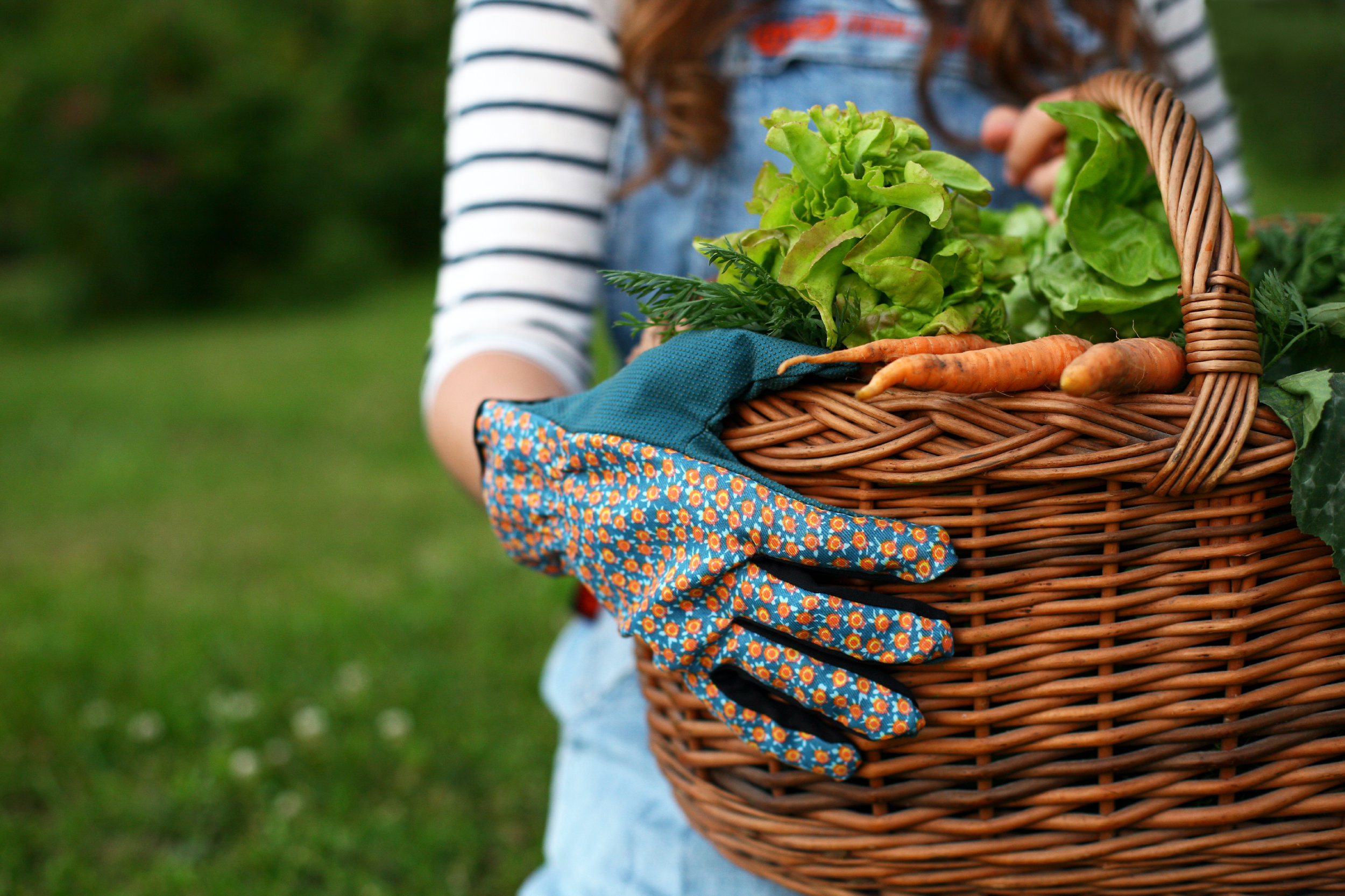 Getting Started with Container Gardening -