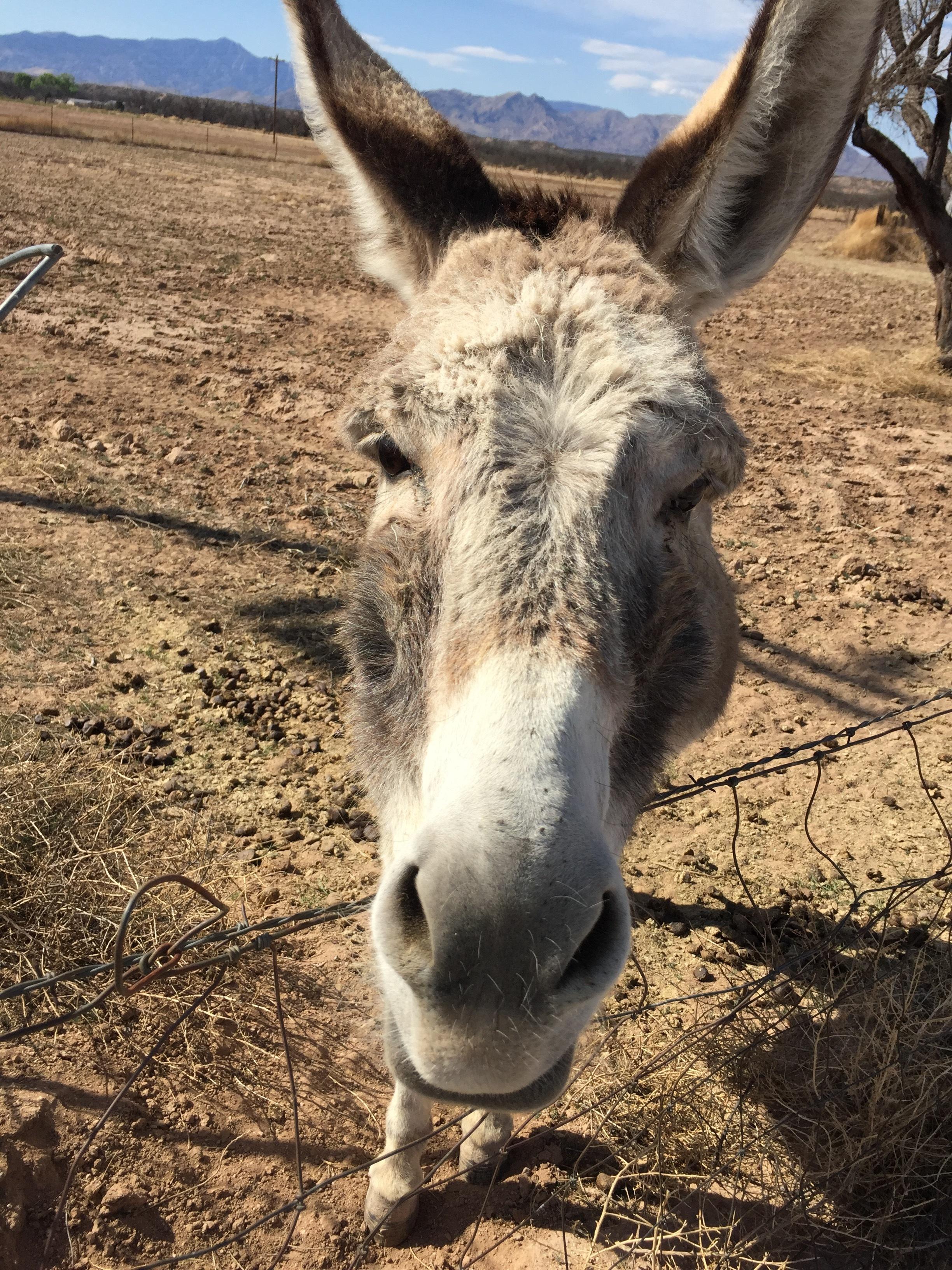Singing Wind Book Store Donkey
