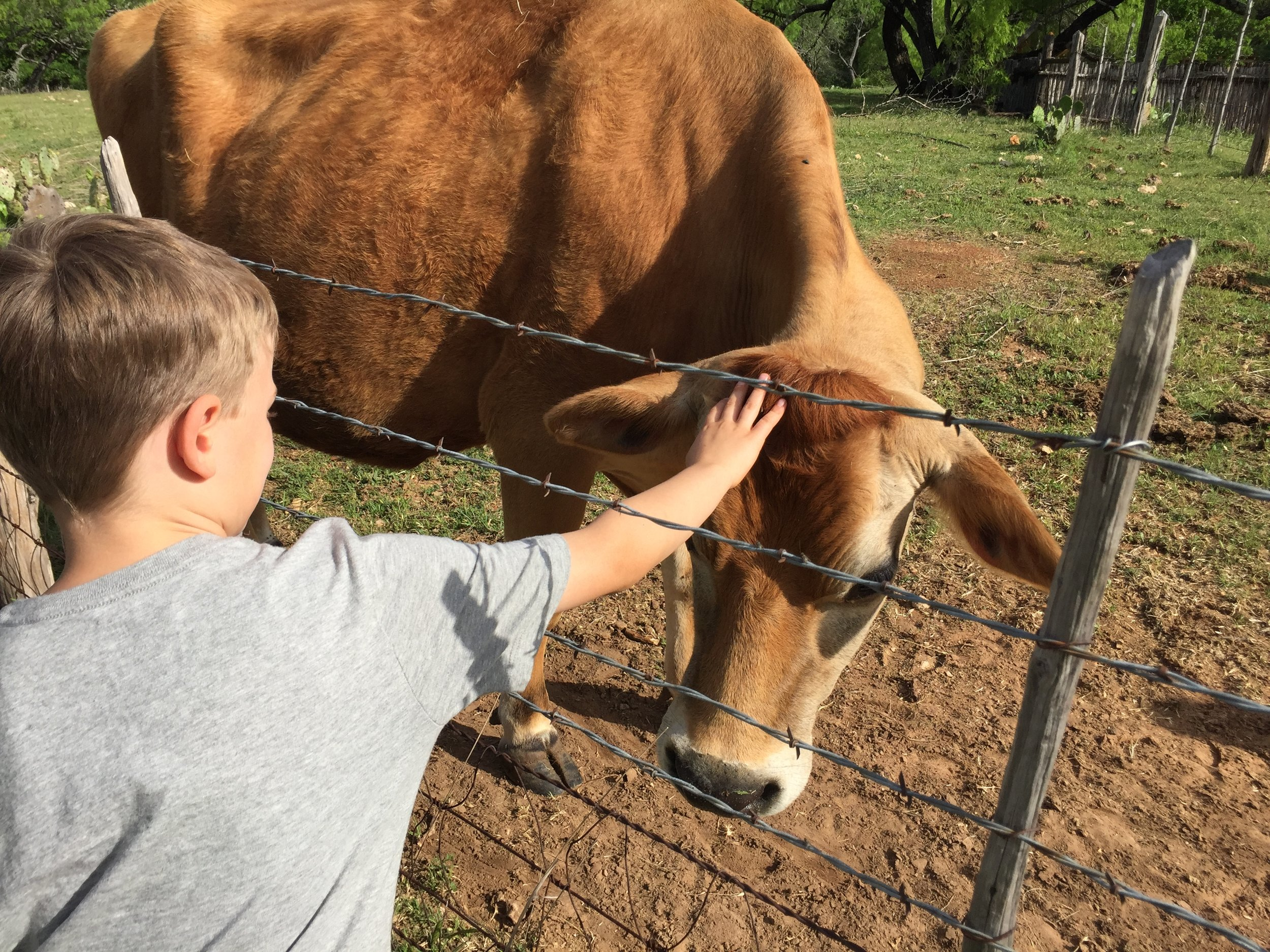 Checking out the cows at theLBJ ranch