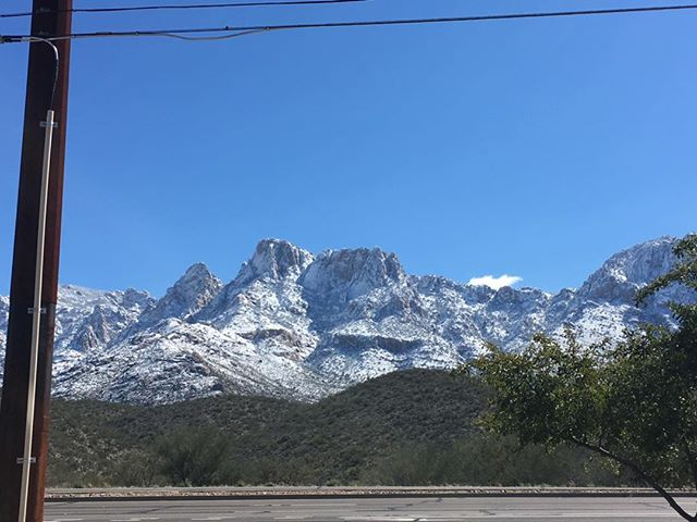 Beauty is everywhere! #Tucson #catalinamountains #snowday #bluebirdday