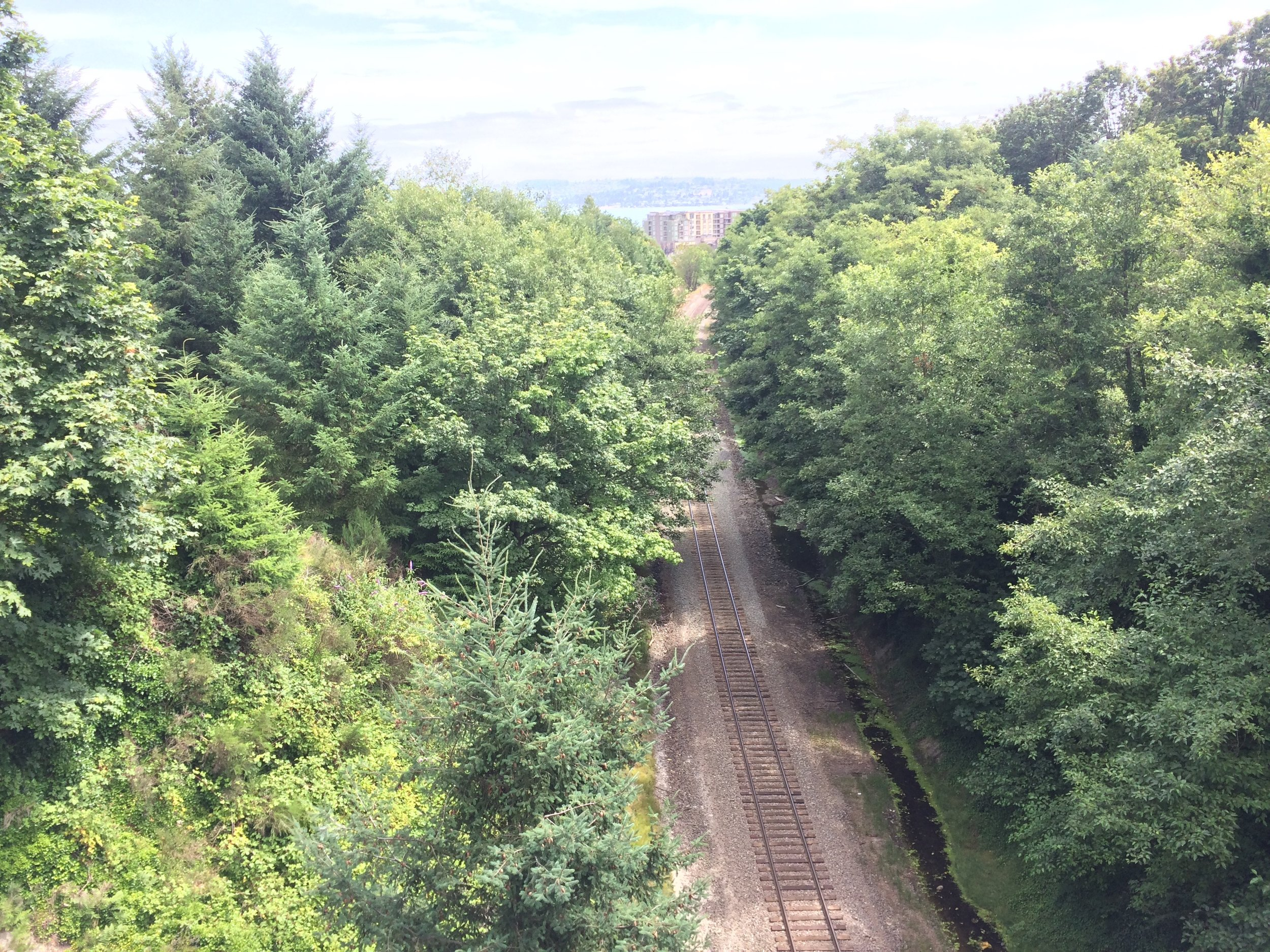 Tracks through Rust Park
