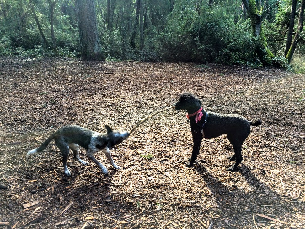 Point Defiance Dog Park