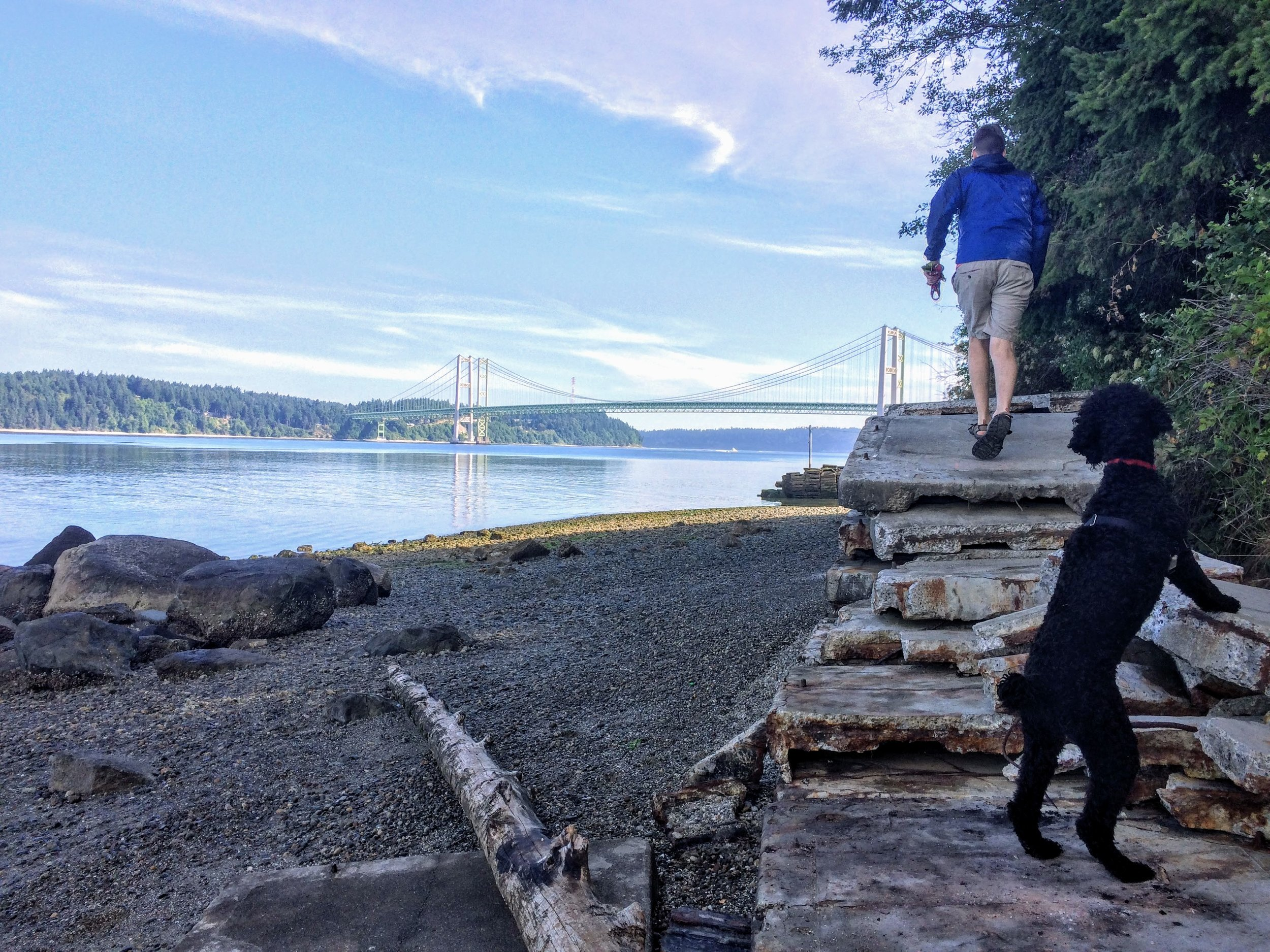 Michael and Dandie having a run-around at Titlow Beach with the Narrows Bridges beyond.
