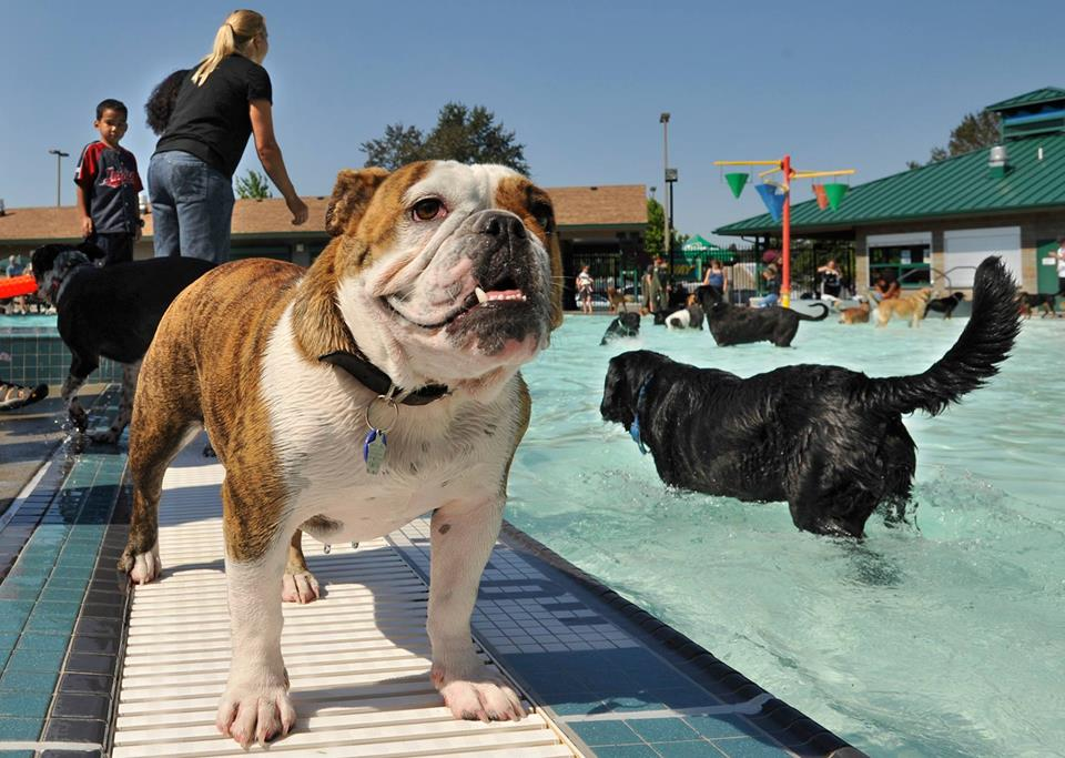 Image from  Dog Gone Run & Pooch Pool Party Facebook Event