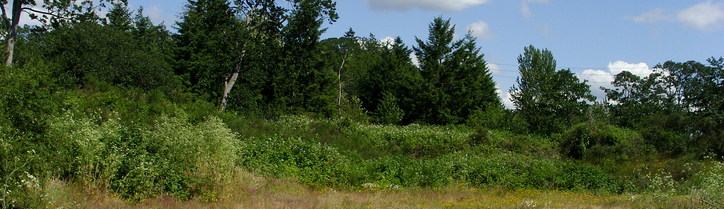 Image from    Metro Parks Tacoma