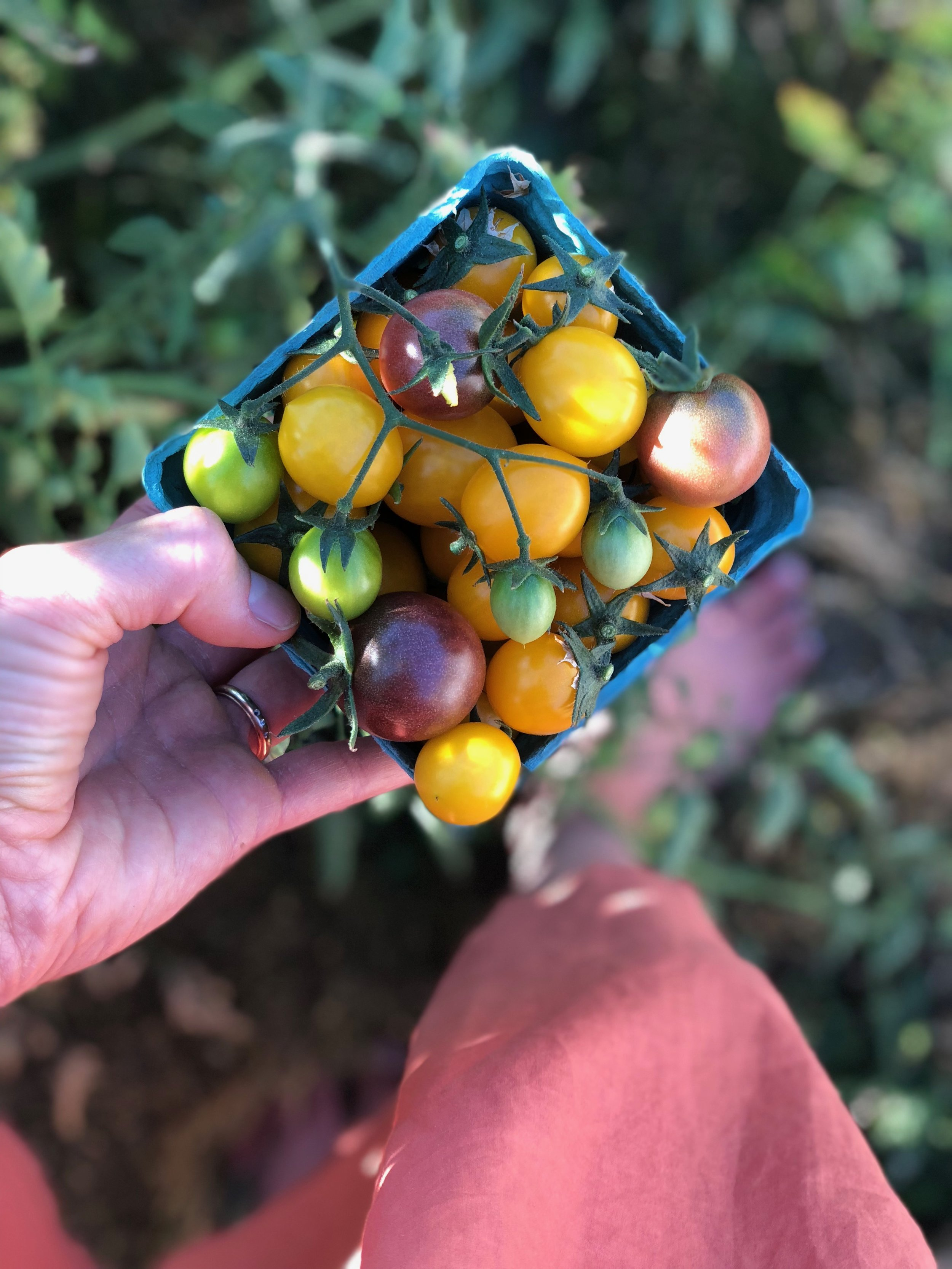 The EFN grows food on their 80 acre farm, but they also encourage all of us to plant an extra row in our home gardens to harvest and donate to a local food bank. I had more tomatoes than I could handle last summer and I love this idea!