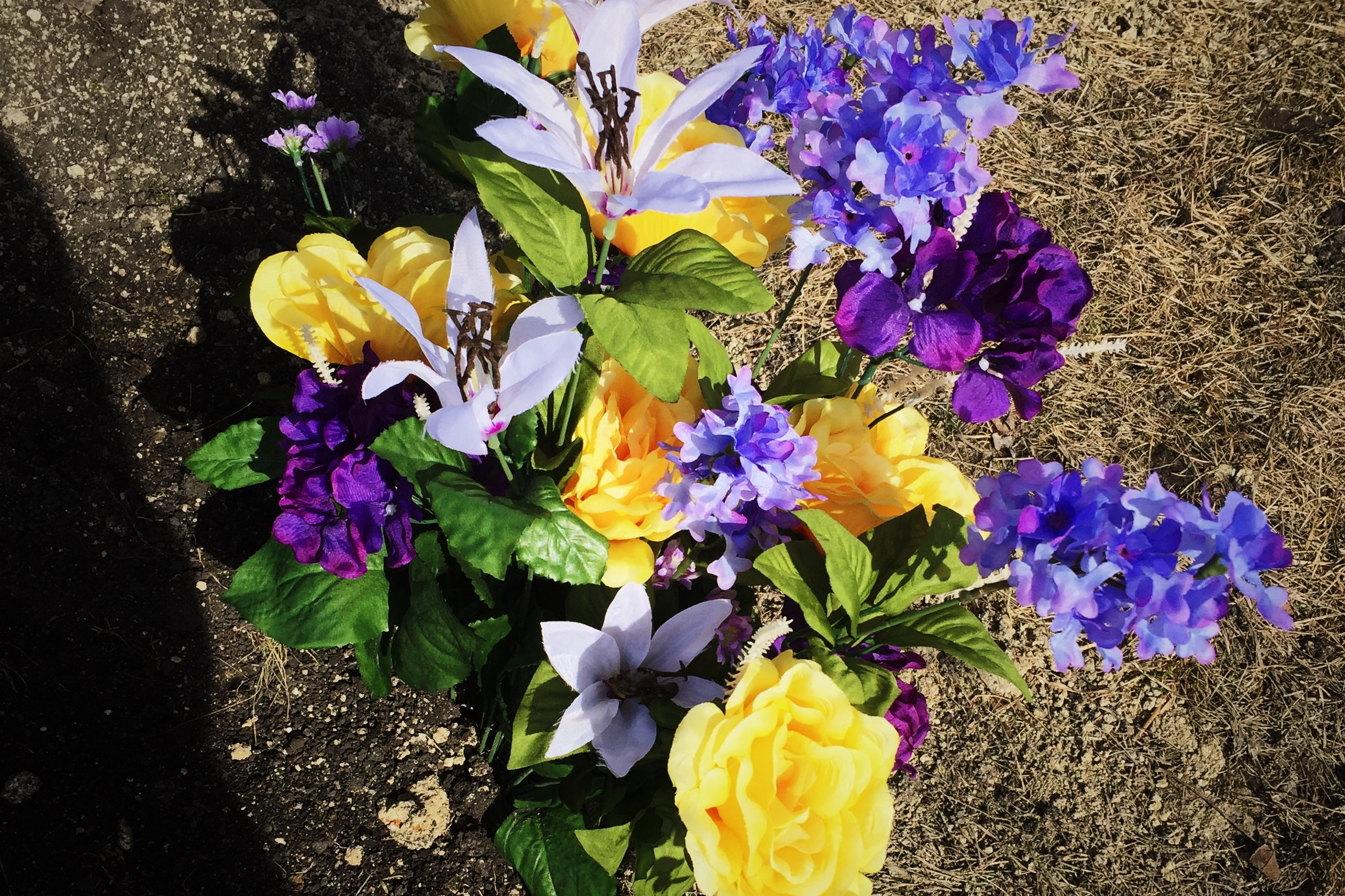 Flowers for Norah, picked out by Lane.