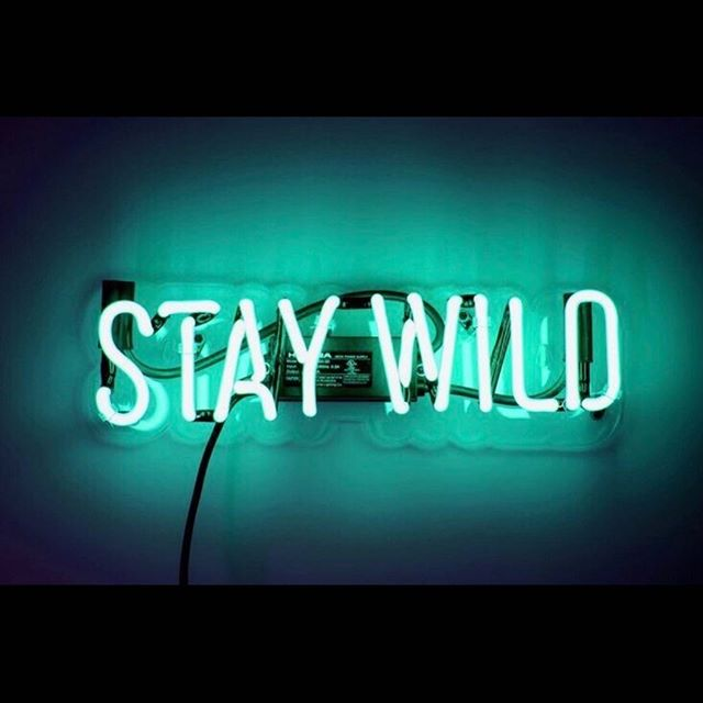 Stay wild my friends💙  Open today with our new hours, 12:00-6:00 Come say hi!