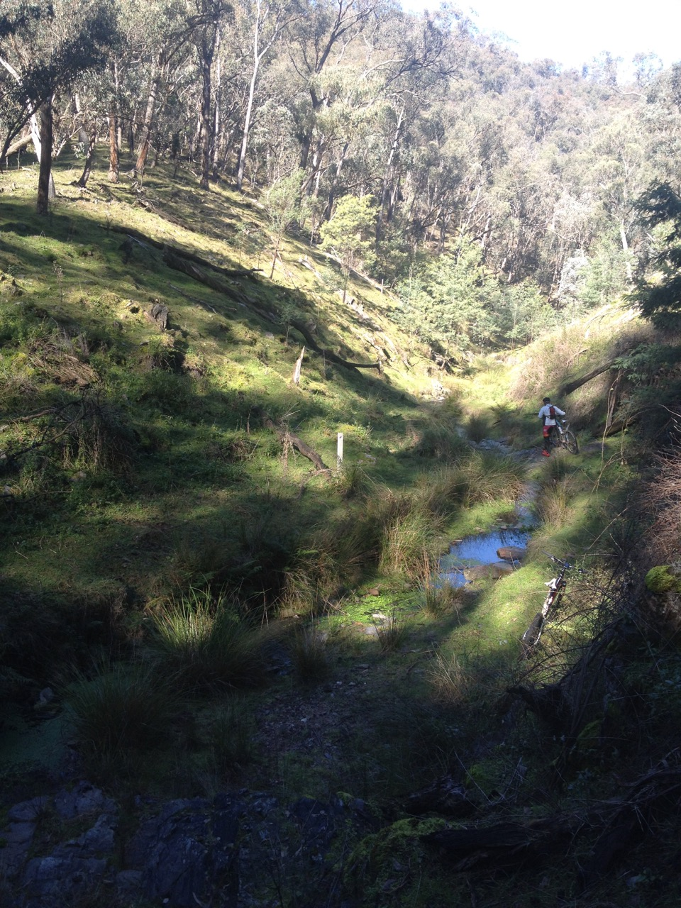 Spring Creek in Woomargama State Conservation Area