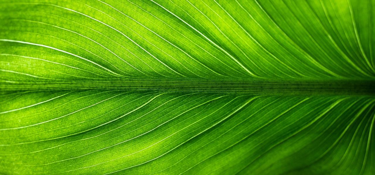 leaf-2210973_1280.jpg