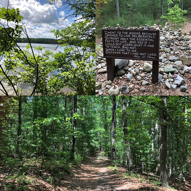 The site of Thoreau's cabin ❤️ Thanks to my Harvard colleague for the walk around Walden Pond. #boston #thoreauscabin #massachusetts #waldenpond