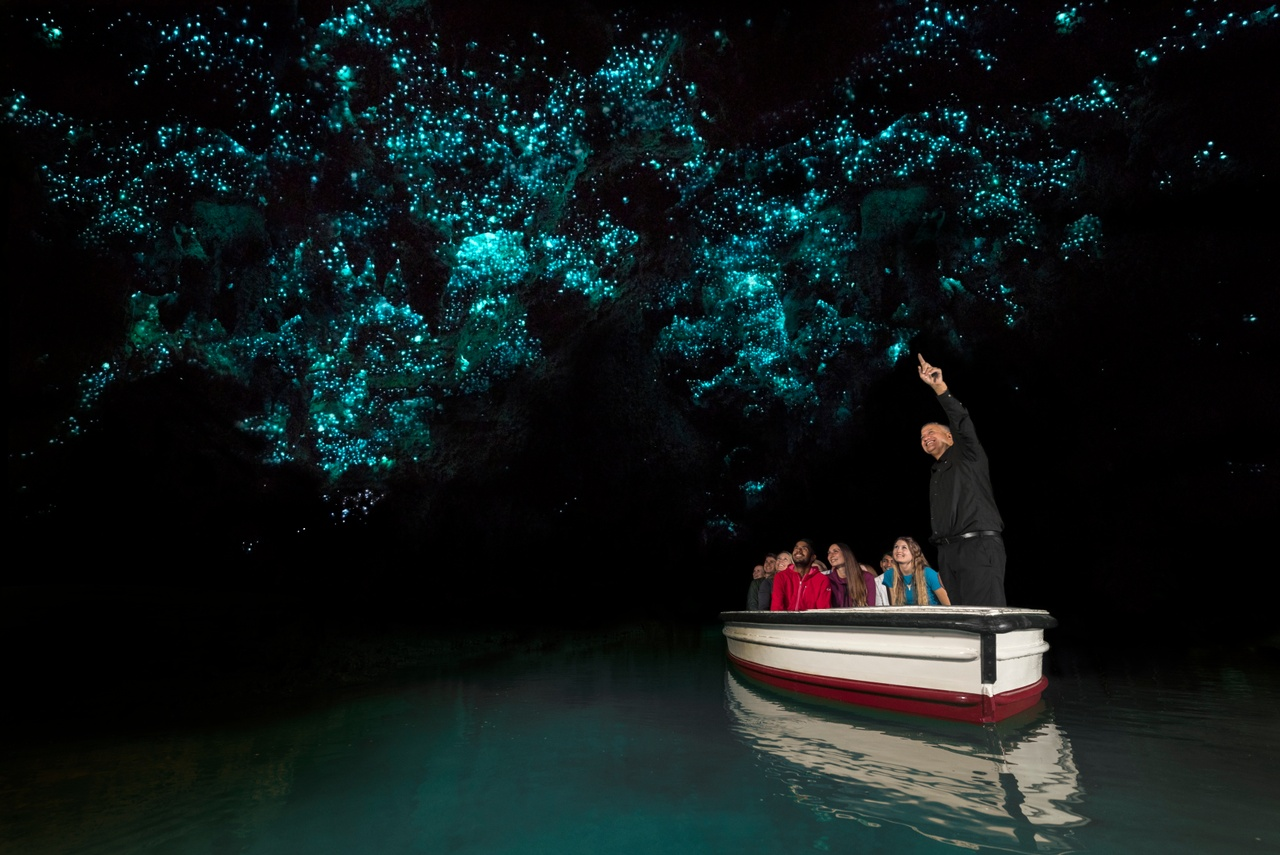 Waitomo Caves Tour - From $145 NZD per person