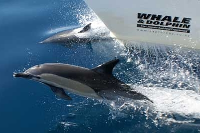 AUCKLAND WHALE AND DOLPHIN SAFARI        - Discount : 10%