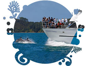 InterCity Bay of Islands Day Tour + Dolphin Cruise  - Partner company tour