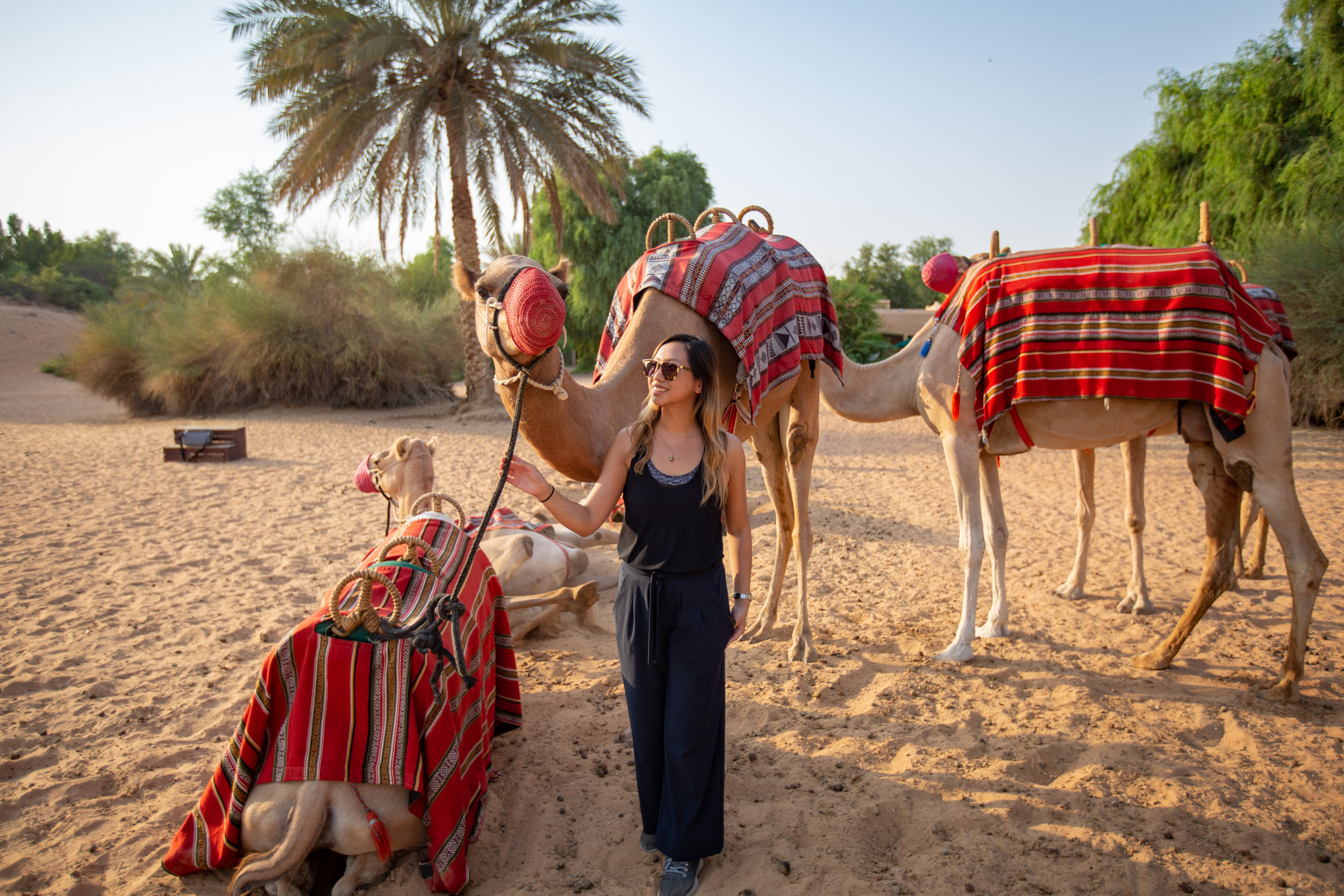 camel riding at al maha