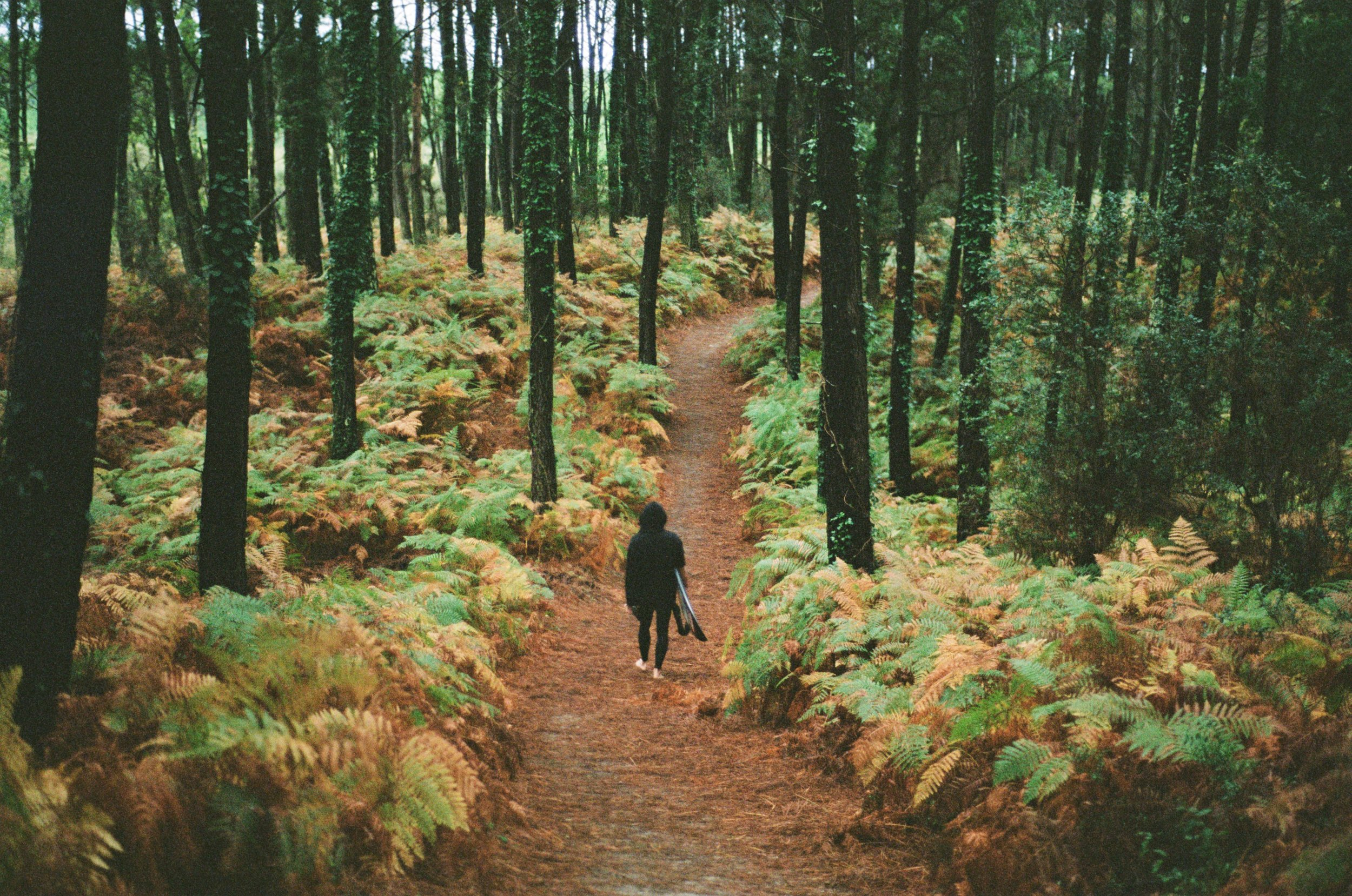 Dion Forest @yentlt.jpg