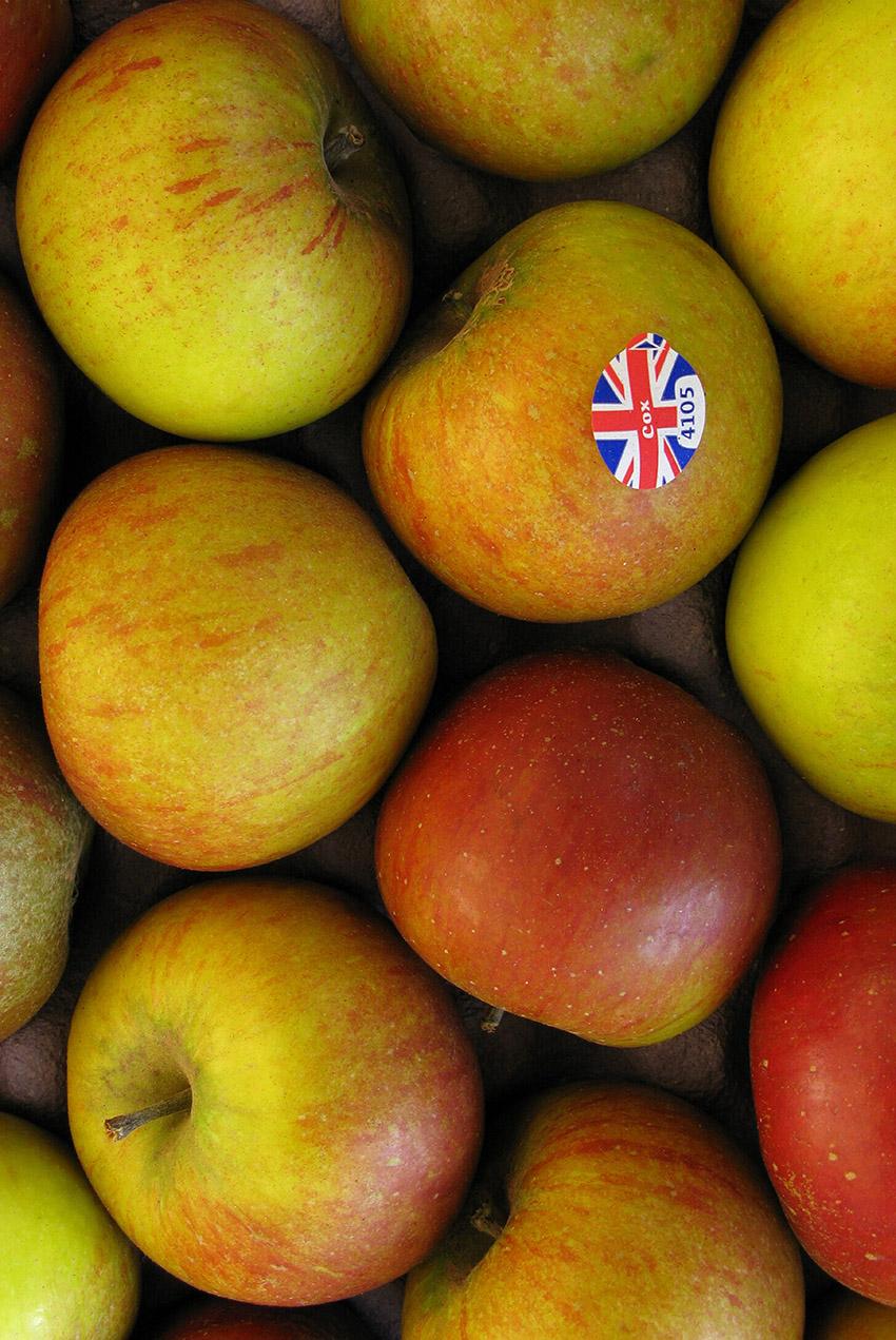 apples a a 079a x 12x18inches.jpg