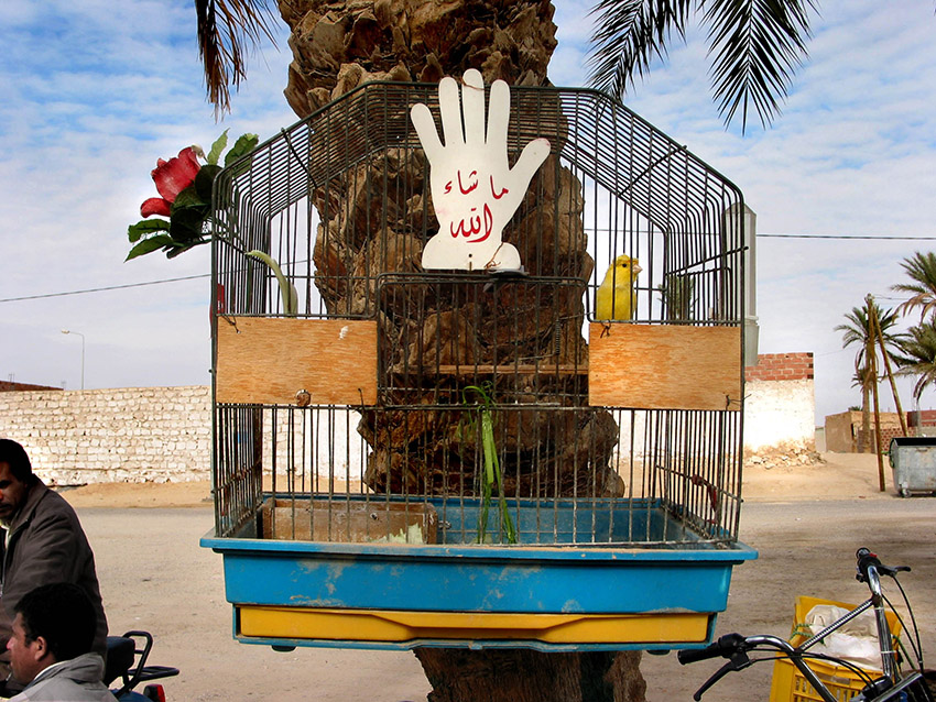 Tunisia 26 birdcage.jpg