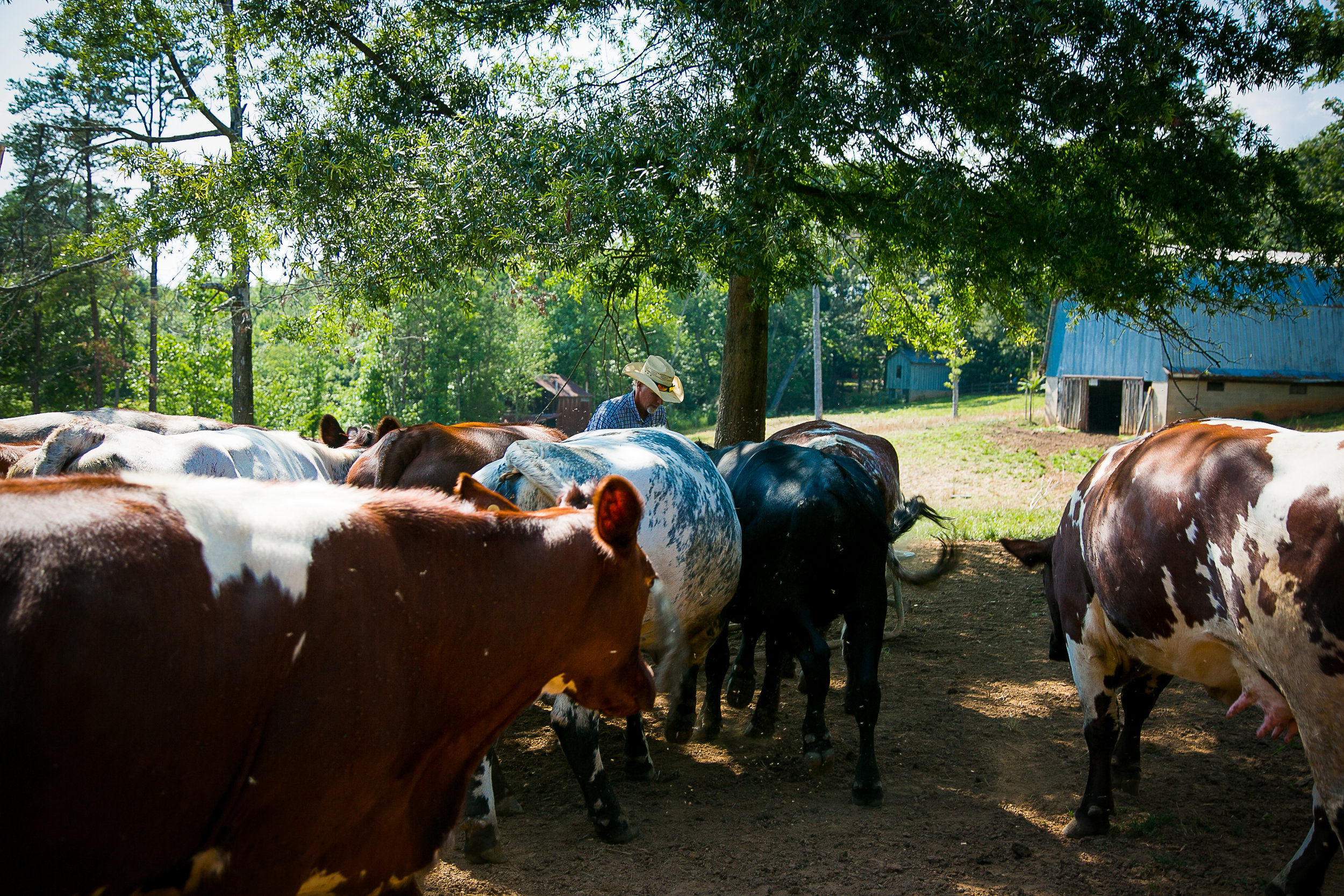 Yokeley Farms 2016-19.jpg