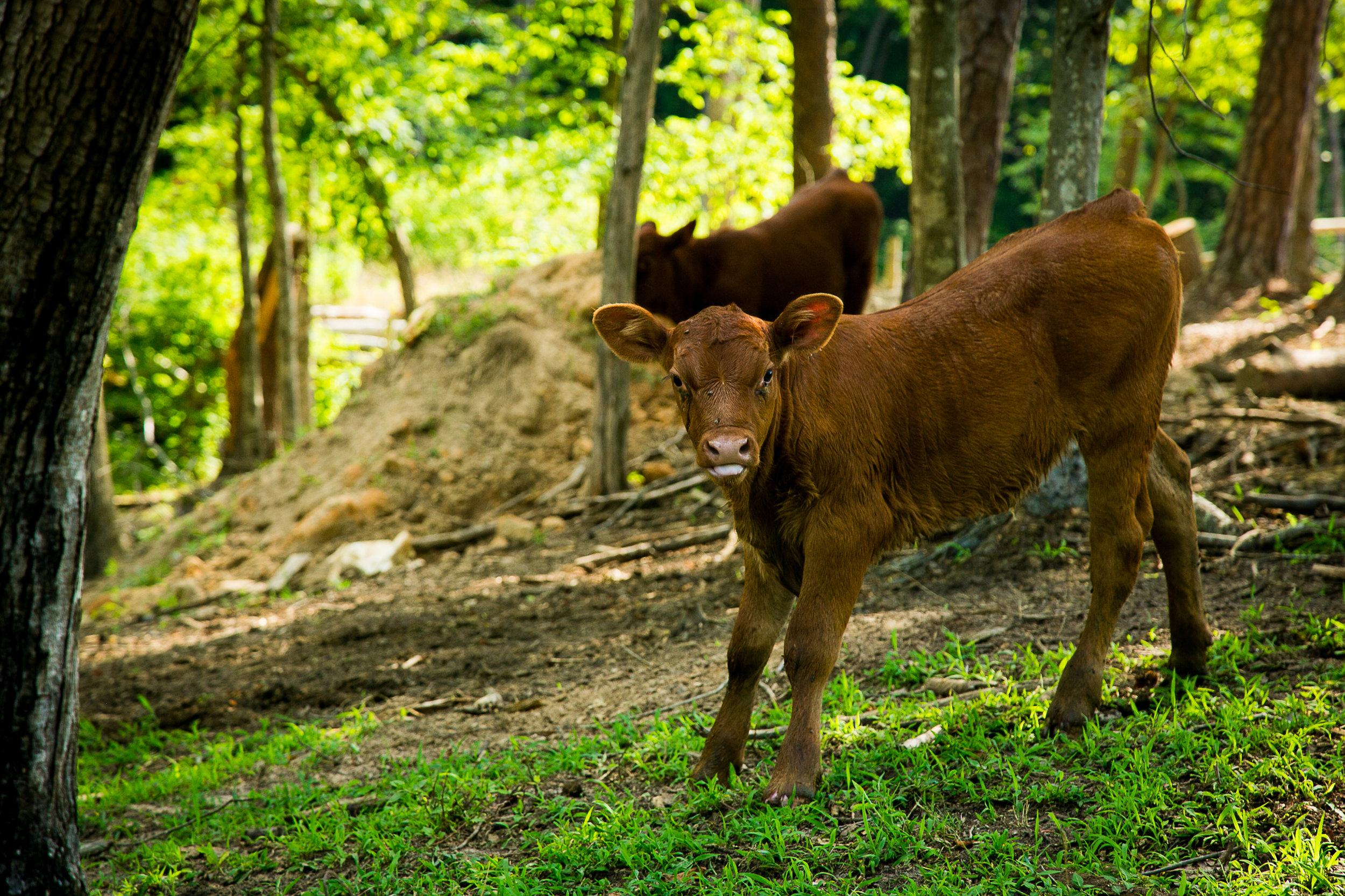 Yokeley Farms 2016-57.jpg