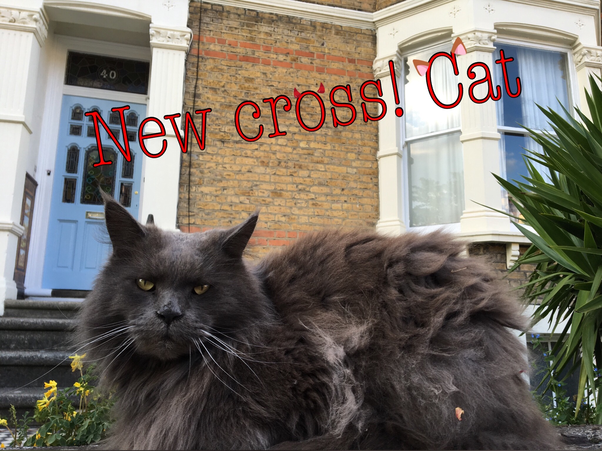 Flynn Richards_New Cross Cat.jpg