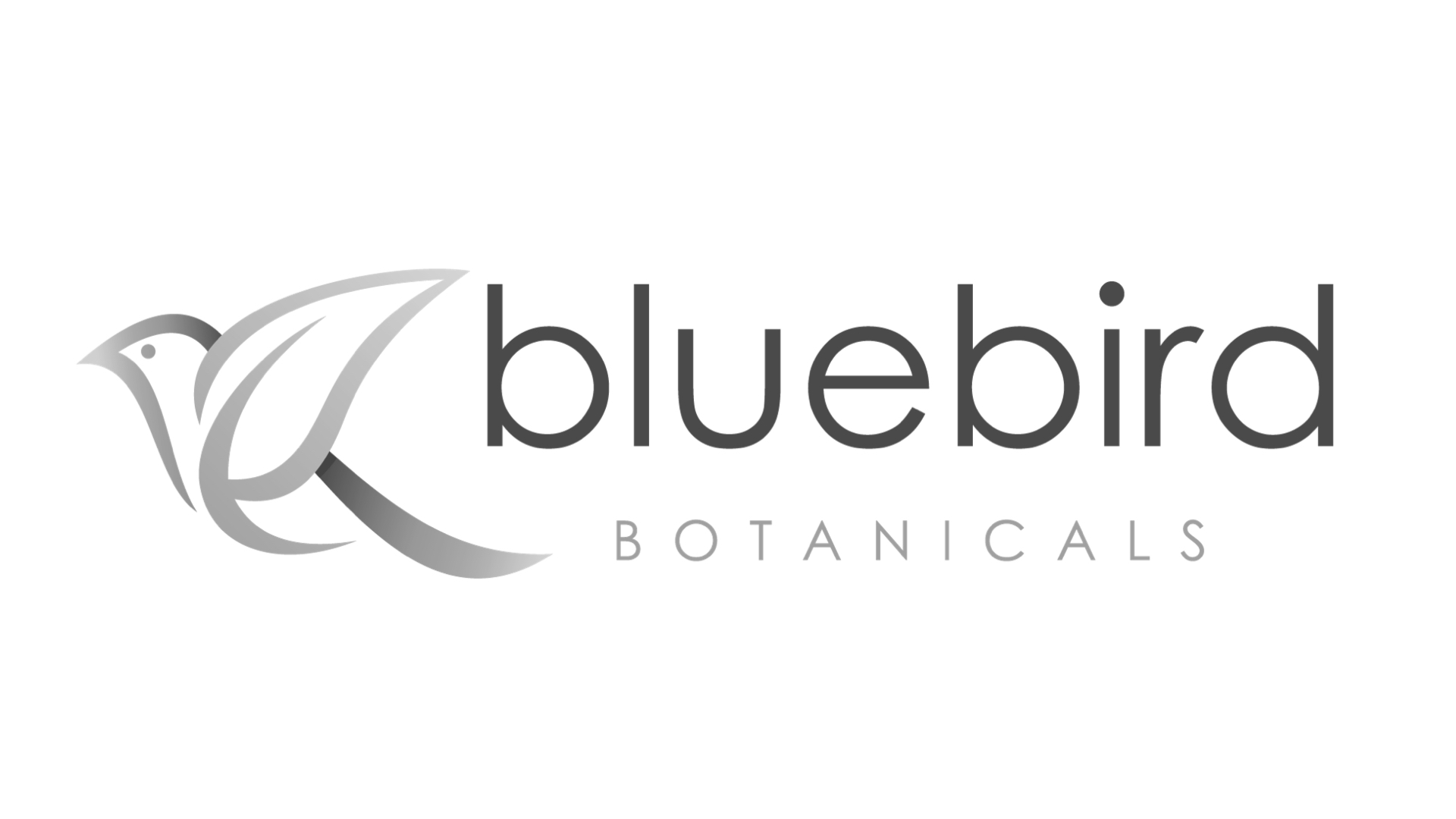 Bluebird homepage logo.001.jpeg