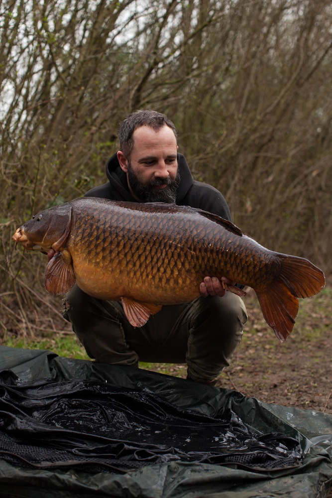 39lb of perfect common