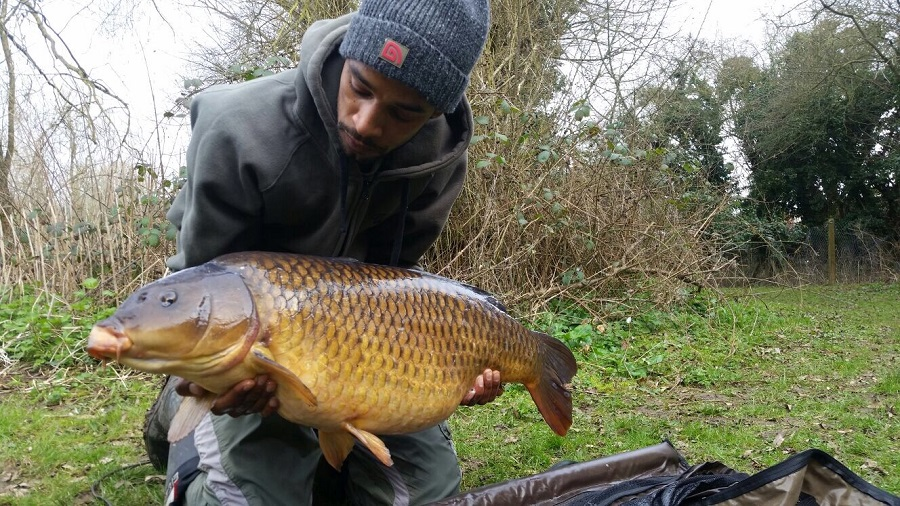 This common kicked it all off