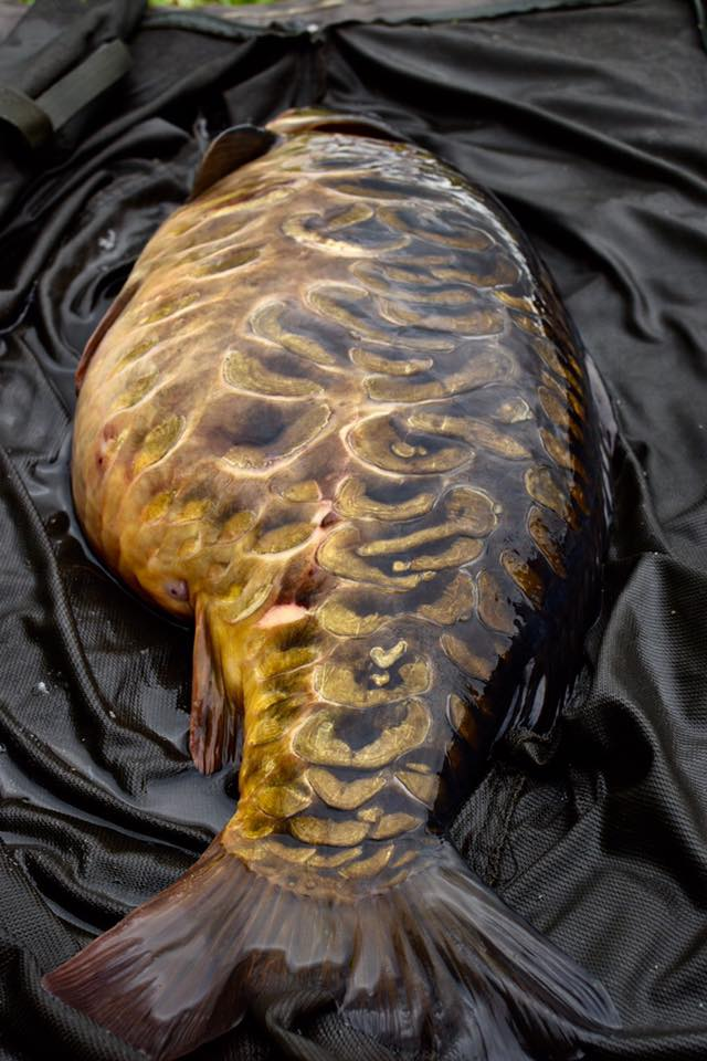 Scaly perfection from Girton