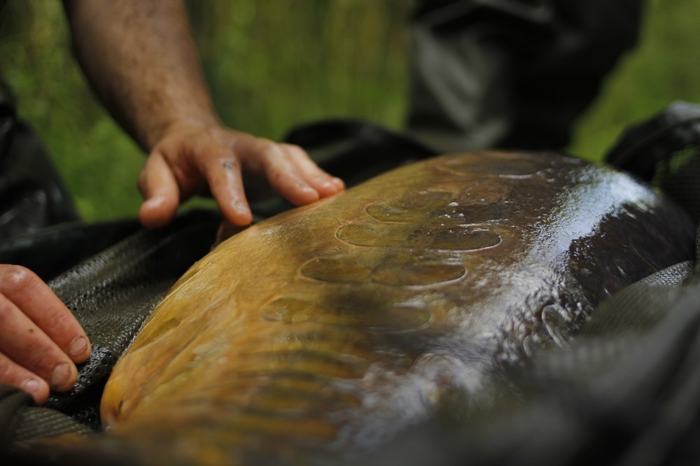 The Parrot still holds the official British record at 68lb 1oz