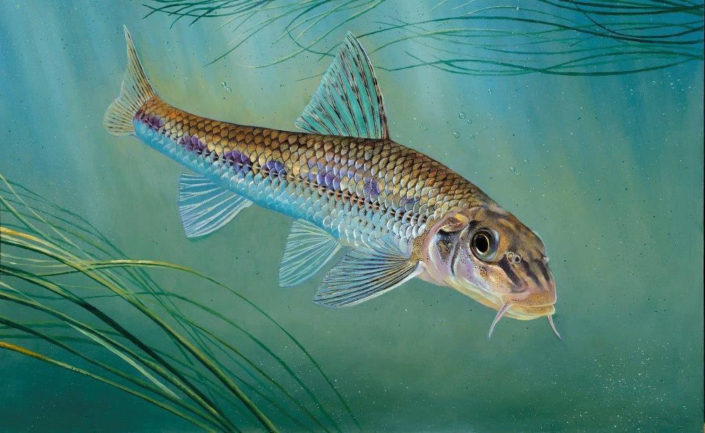 The gudgeon will be the face of the two-rod licence